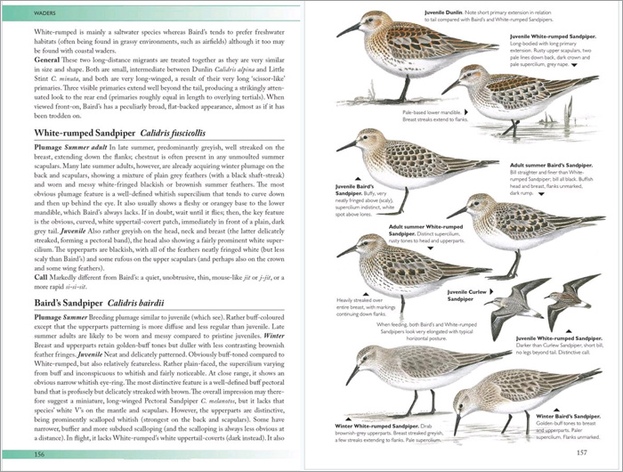 The Helm Guide to Bird Identification example page