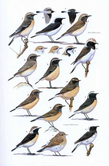 Robins and Chats example