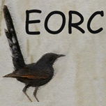 Egyptian Ornithological Rarities Committee