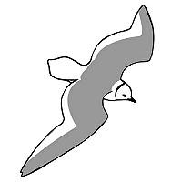 Terugblik Dutch Birding vogelweek 2021