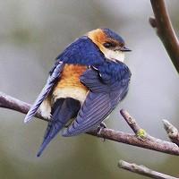 Dutch Birding Voorjaarsweekend 2019 op Texel